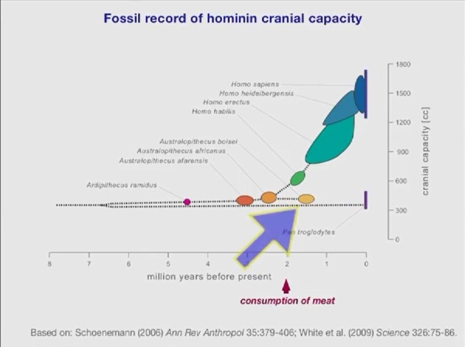 Cranial Capacity of the hominis