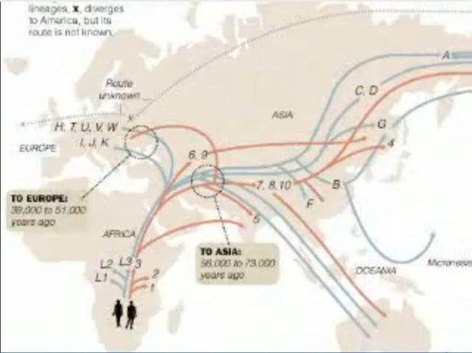 Human lineages_man and woman_map